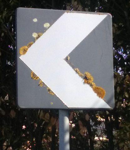 cartello con licheni